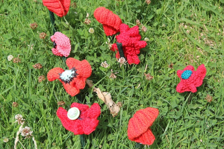 Poppy display