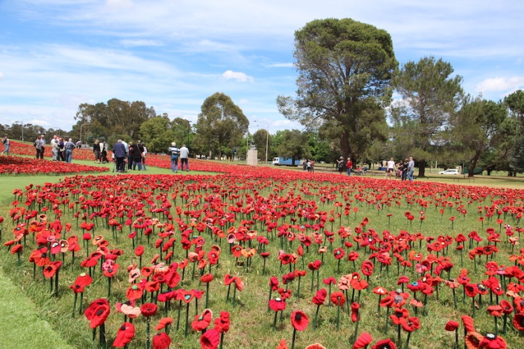 A field of poppies in Australia