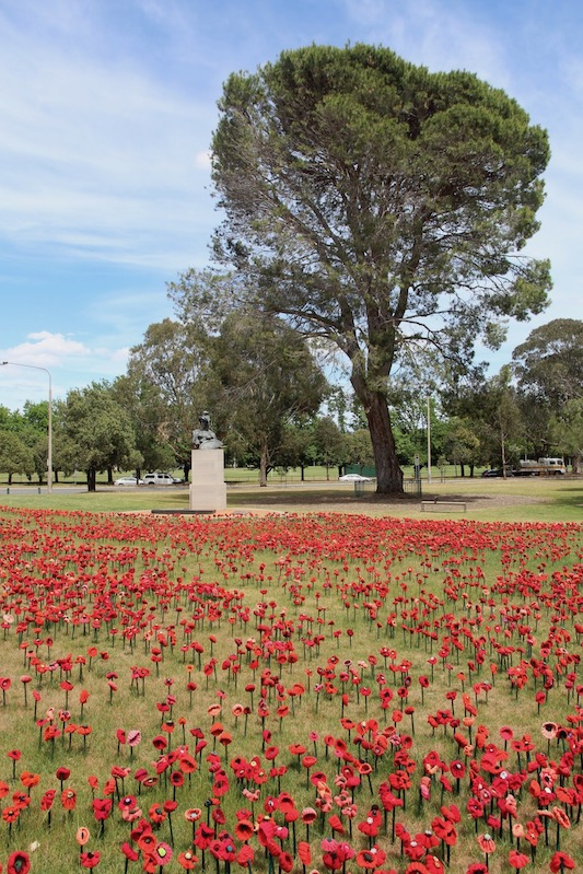 Poppies at Australian War Memorial