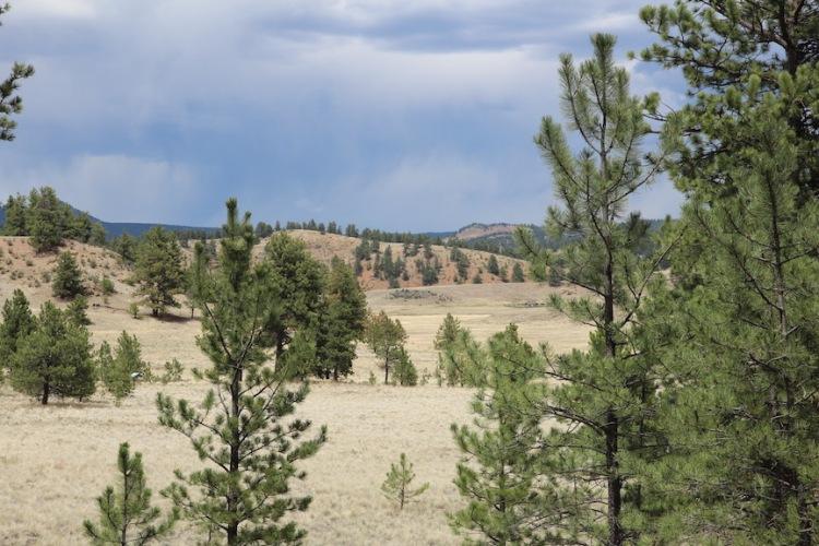 landscape at Florissant Fossil Beds