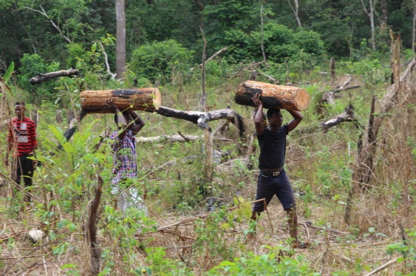Carrying logs in Sierra Leone