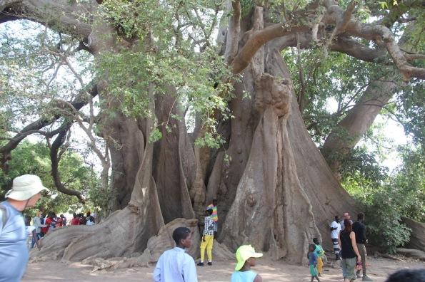 Sacred tree, Senegal, Abéné