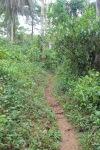 Path to vine bridge, Guinea, West Africa