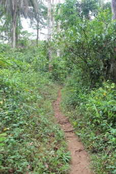Path to vine bridge, Guinea, West Africa