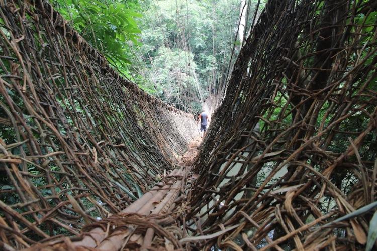 Vine bridge, Guinea, West Africa