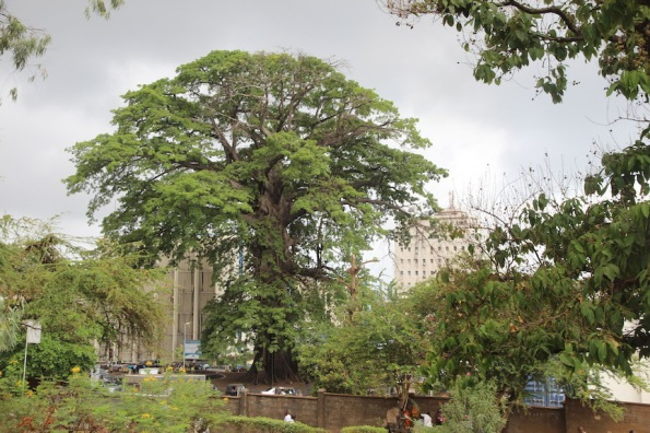 The Cotton Tree, Freetown, Sierra Leone