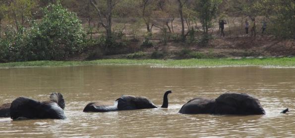 Elephants, Mole National Park, Ghana