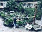 Garden outside Museum of Vietnamese History