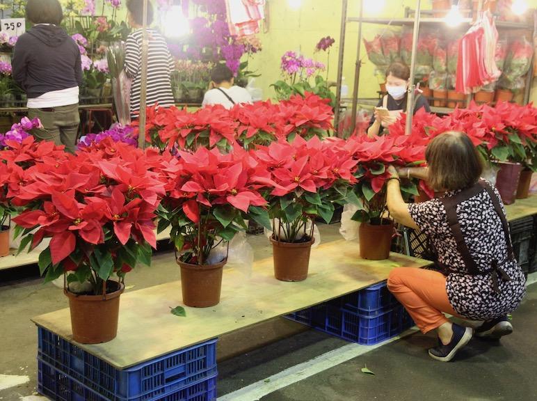 Poinsettias in Taipei Taiwan flower market