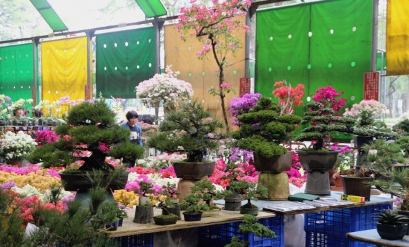 Bonsai, Flower market Taipei Taiwan